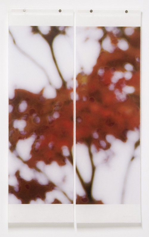 Jeri Eisenberg, Japanese Maple,  #2/12 Archival Pigment Ink on Kozo Paper Infused with Encaustic Medium