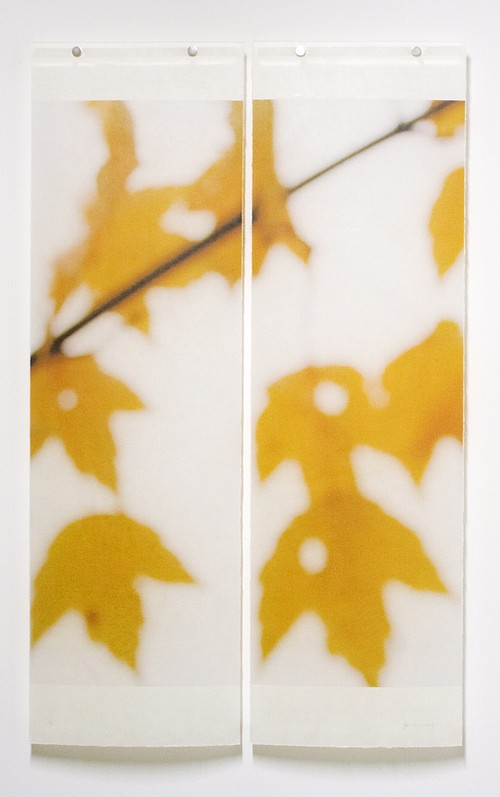 Jeri Eisenberg, Sugar Maple Floaters (Orange), No. 2,  #9/12 Archival Pigment Ink on Kozo Paper Infused with Encaustic Medium