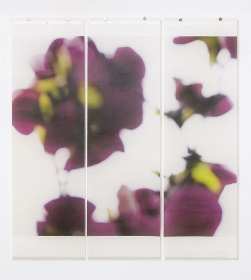 Jeri Eisenberg, Dark Magnolia, No. 4, 1/12 Archival Pigment Ink on Kozo Paper Infused with Encaustic Medium