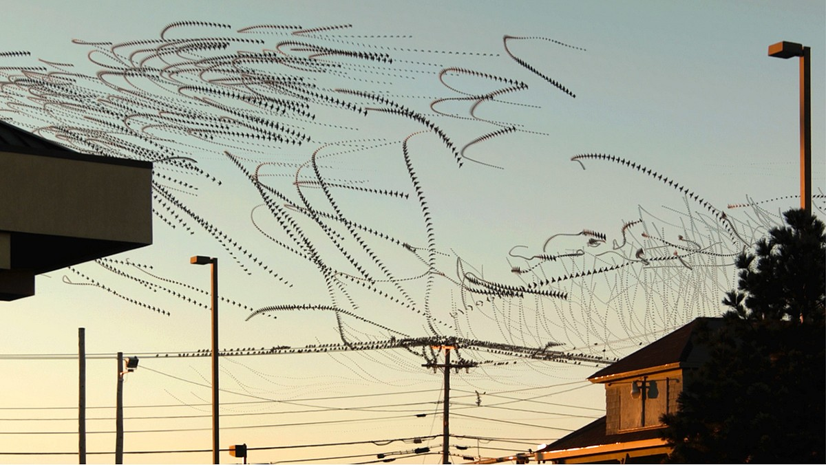Dennis Hlynsky, Line Birds 2 (Still) Photograph, Archival Paper with Pigment Ink
